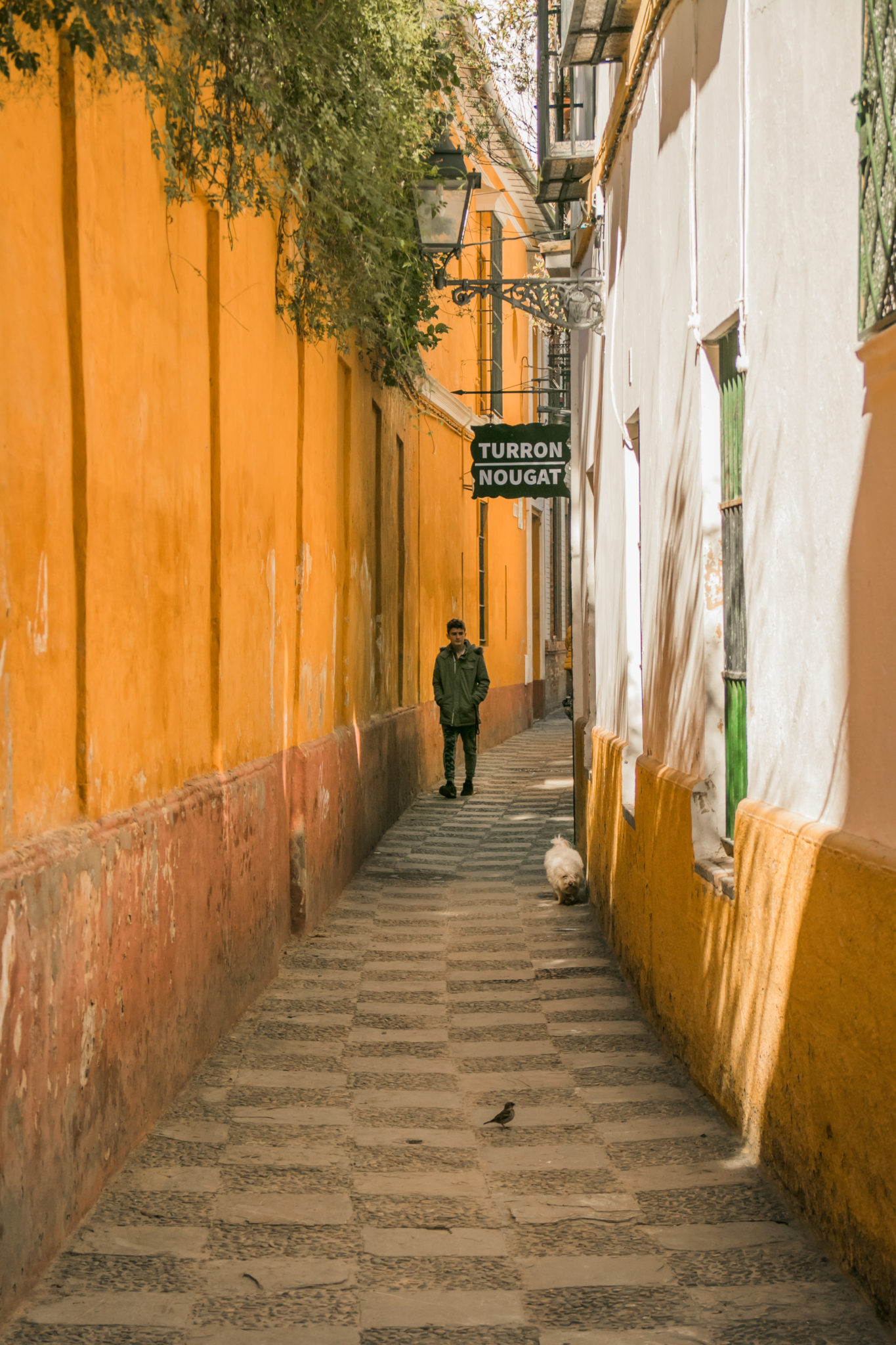 The yellow streets of Seville's Jewish Quarter, Spain